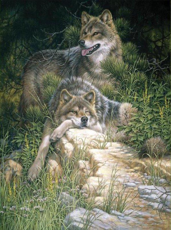 Семьи волков - образец