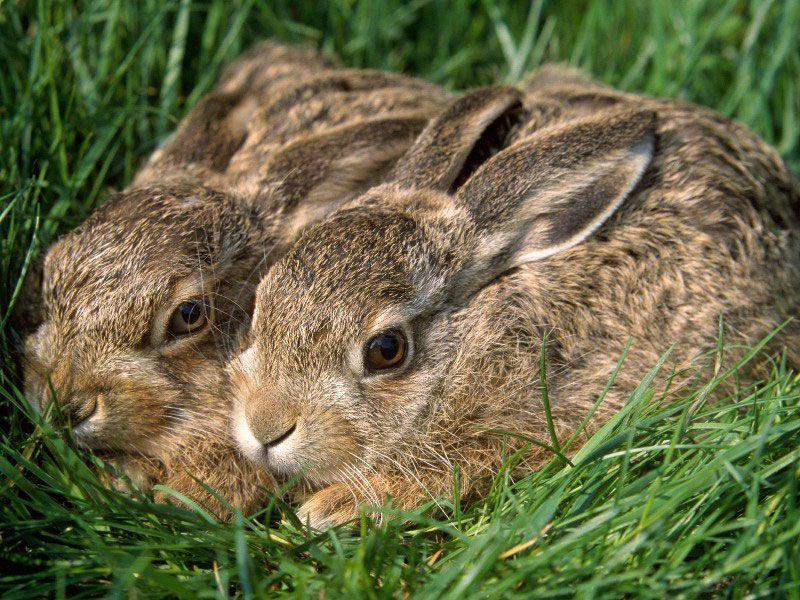 Картинки зайчата в лесу весной