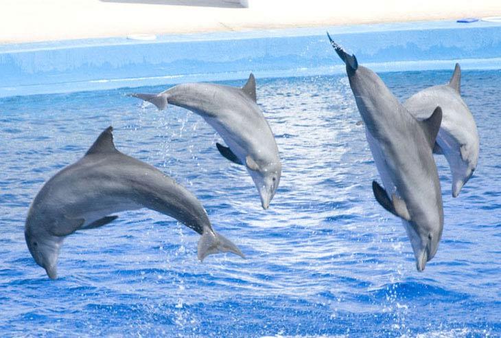 Детям о дельфинах фото