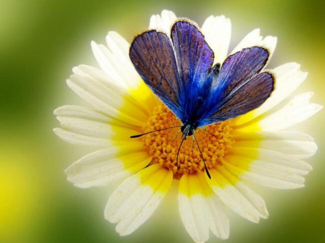 разновидности бабочек и их названия и фото Babochka_14_small