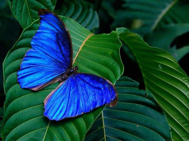 разновидности бабочек и их названия и фото Babochka_1_small