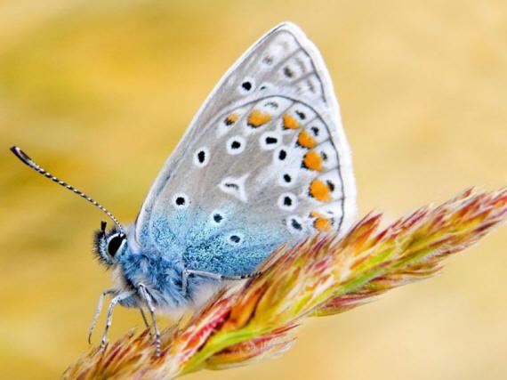 разновидности бабочек и их названия и фото Babochka_5_small