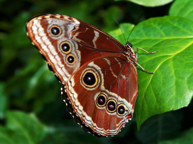 разновидности бабочек и их названия и фото Babochka_9_small