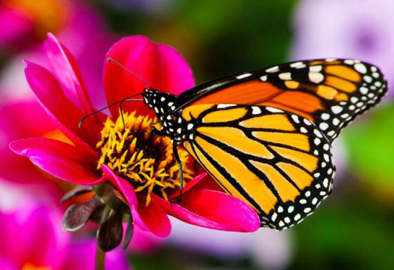 разновидности бабочек и их названия и фото Babochki10_small1