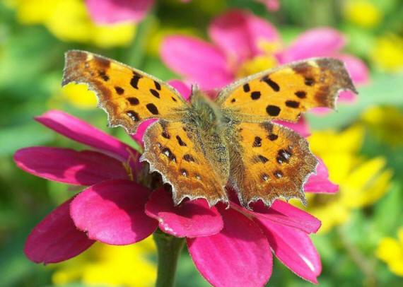 разновидности бабочек и их названия и фото Babochki11_small1