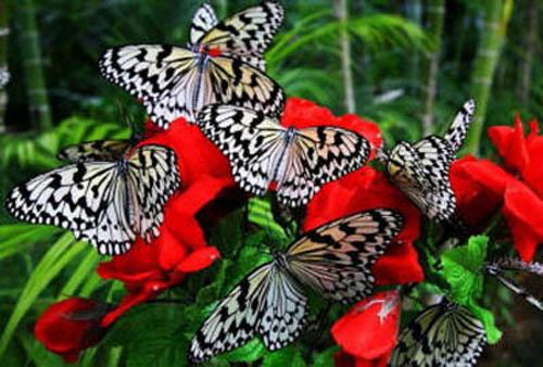 разновидности бабочек и их названия и фото Babochki13_small
