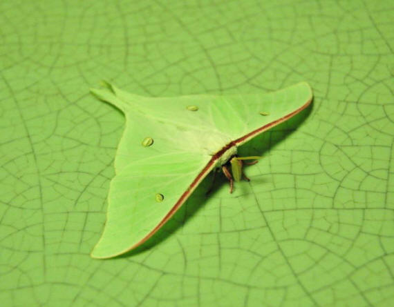 разновидности бабочек и их названия и фото Babochki16_small1