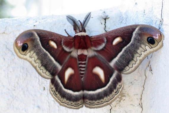 разновидности бабочек и их названия и фото Babochki17_small1