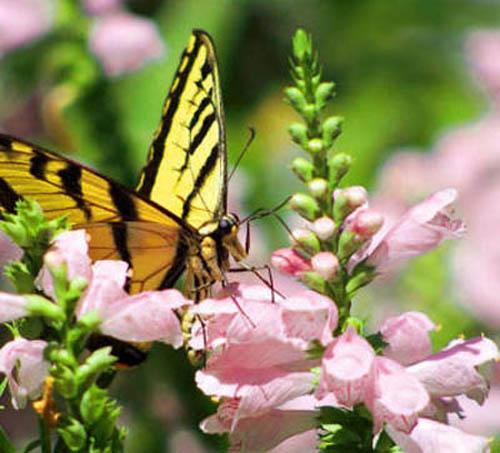 разновидности бабочек и их названия и фото Babochki1_small