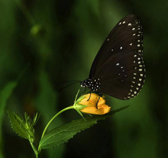 разновидности бабочек и их названия и фото Babochki22_small1