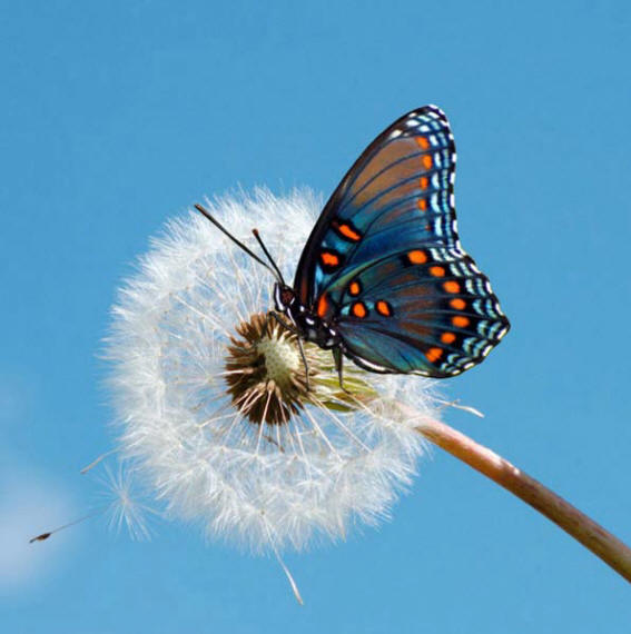 разновидности бабочек и их названия и фото Babochki23_small1