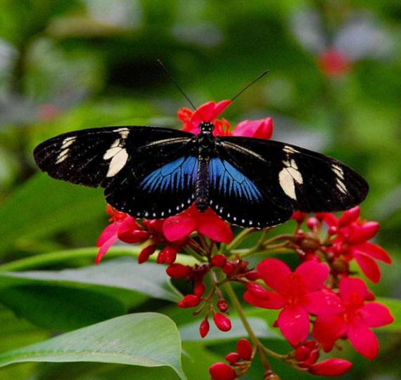 разновидности бабочек и их названия и фото Babochki24_small1