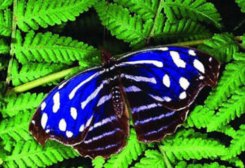 разновидности бабочек и их названия и фото Babochki2_small