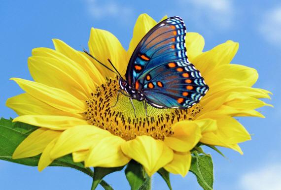 разновидности бабочек и их названия и фото Babochki2_small1