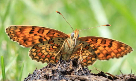 разновидности бабочек и их названия и фото Babochki30_small1