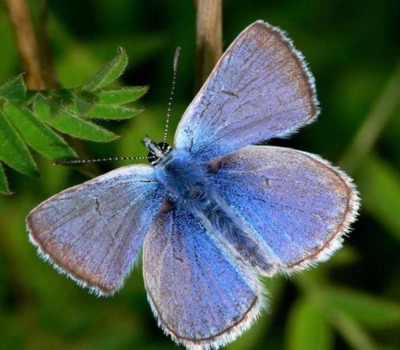 разновидности бабочек и их названия и фото Babochki31_small1