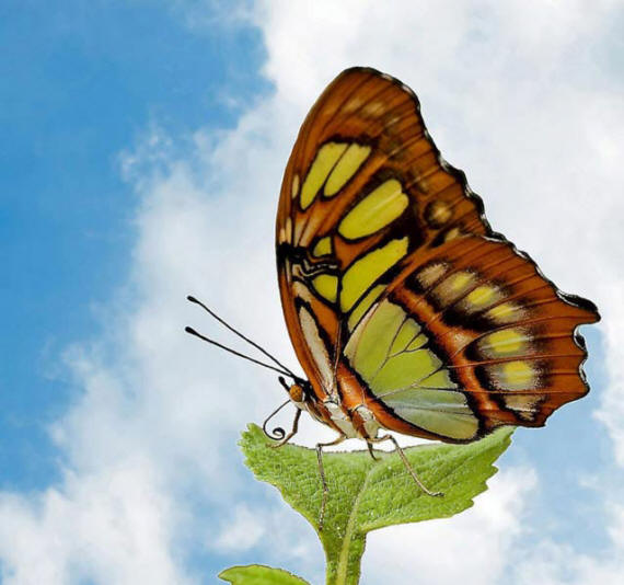 разновидности бабочек и их названия и фото Babochki33_small1