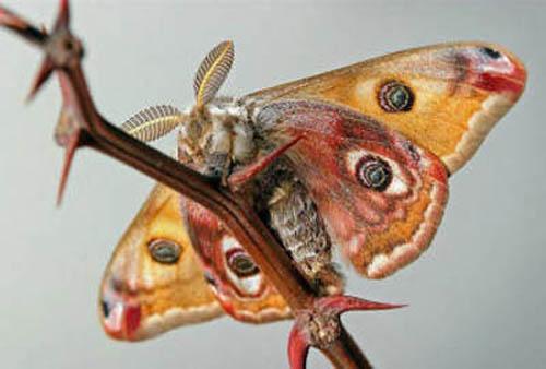 разновидности бабочек и их названия и фото Babochki3_small