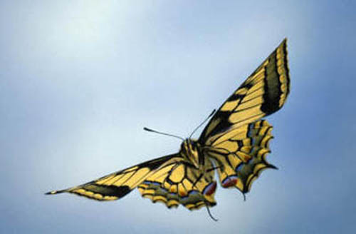 разновидности бабочек и их названия и фото Babochki6_small