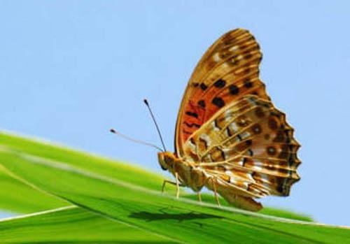 разновидности бабочек и их названия и фото Babochki7_small