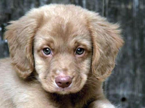 пушистик щенок