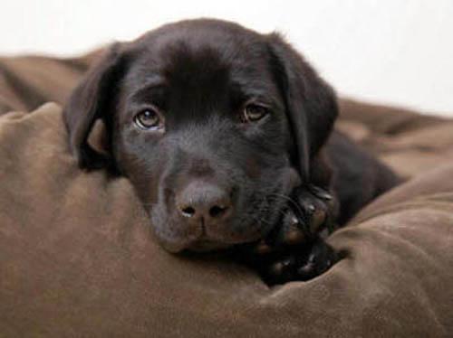 очаровательный щенок