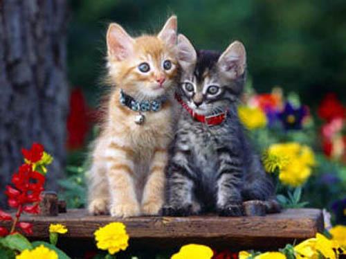 кошачья молодость