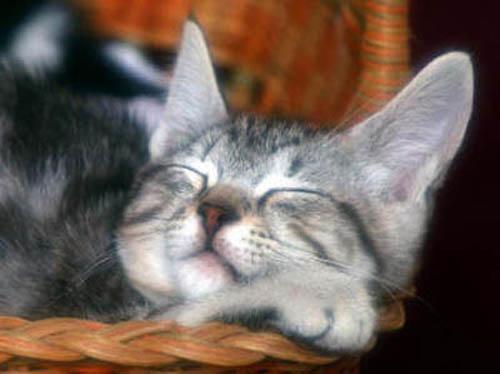 Прикольные животные. Кошка и лукошко (17фото)