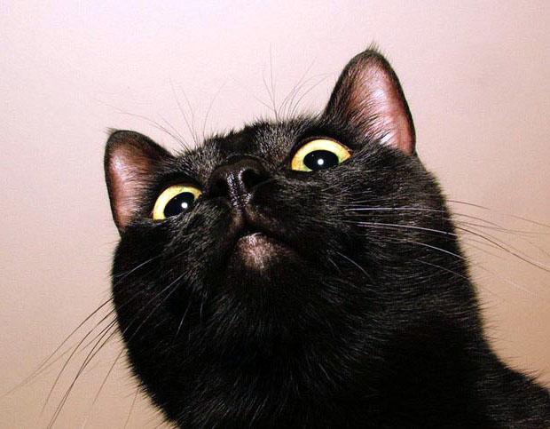 чёрные коты картинки