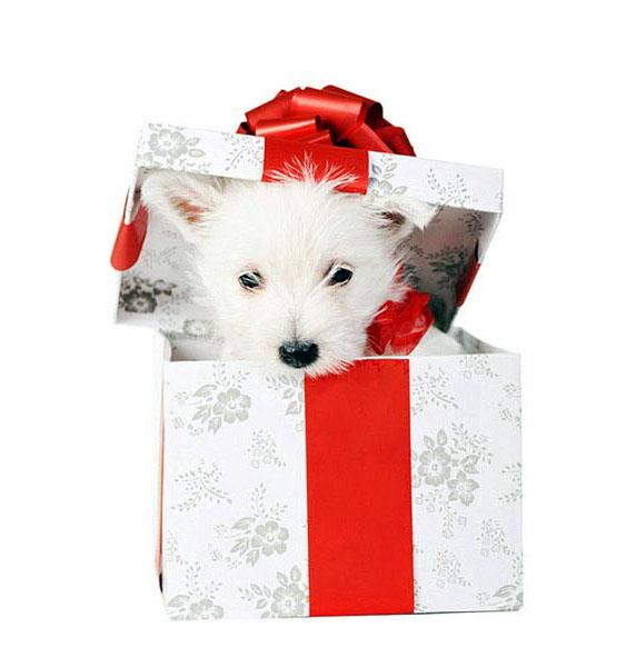 Щенки подарок