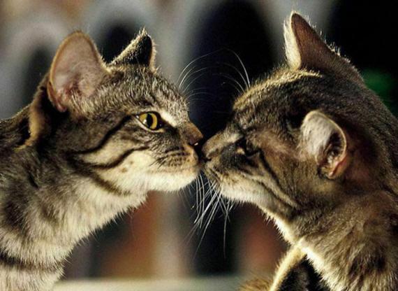Картинки ласковый котик