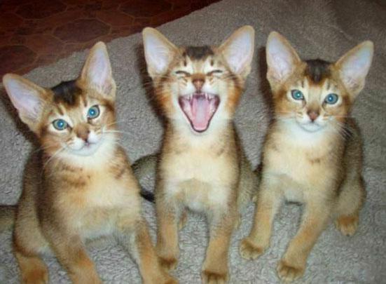 картинки самых смешных котят в мире с надписями