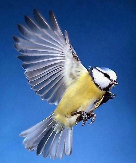 Картинки фото птиц - d1fc