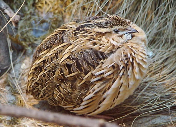 Стихи о перелетных птицах для детей дошкольного возраста
