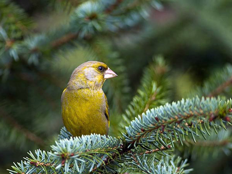 маленьких птиц с названиями