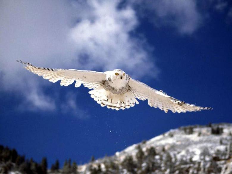 Летящая сова пошаговое - c0