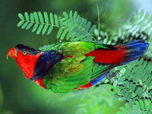 """Схема вышивки  """"Птицы """".  190x143 крестов * 59 цветов * Теги: птицы.  Иглы с позолоченным ушком быстро  """"истираются """"..."""