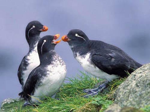 Самые разные птицы очень интересно