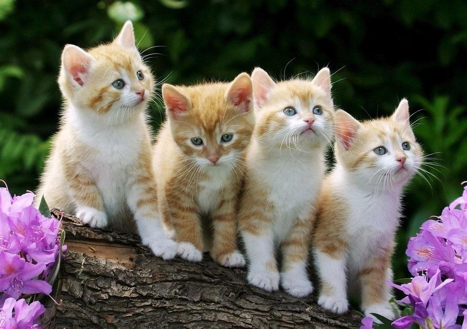 картинки про кошек красивые