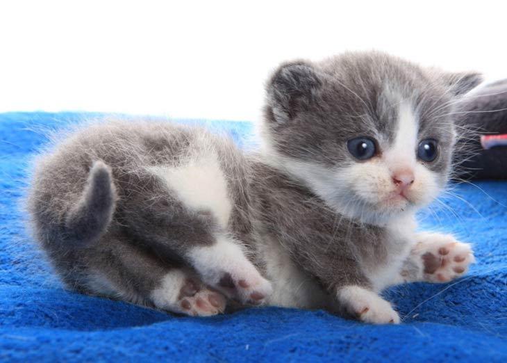 картинки котят маленьких