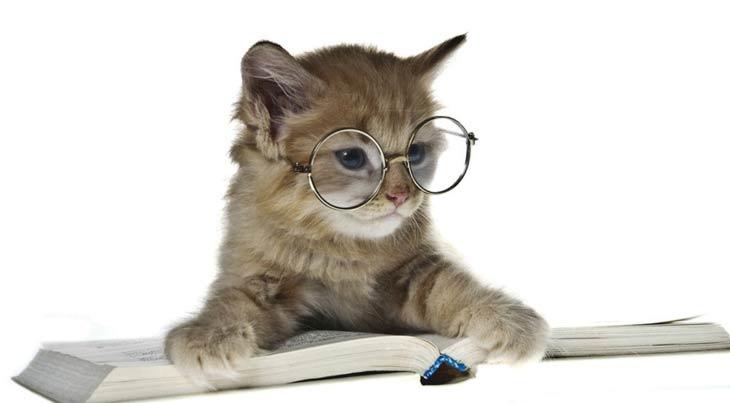 Смотреть фото кошек разных пород - 9