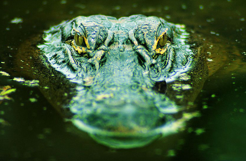 Крокодилы фото картинки