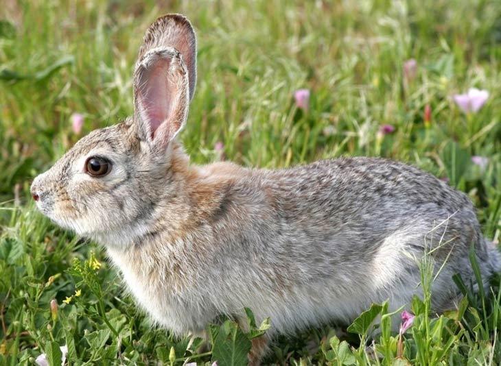 заяц и кролик фото