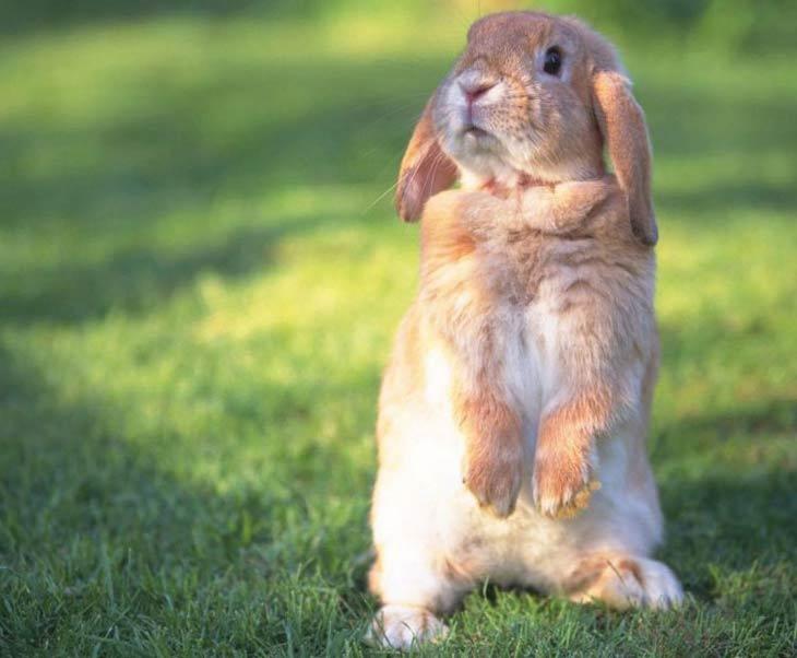 Кролики красивые