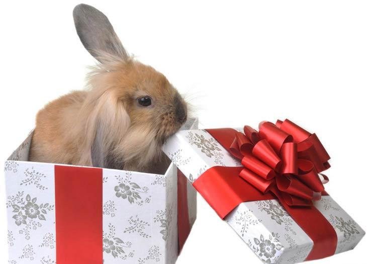 Фото подарок заяц