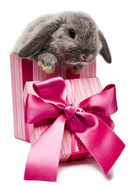 Подарок кролику на день рождения