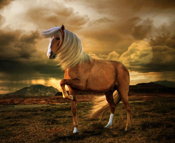 конь коня фото