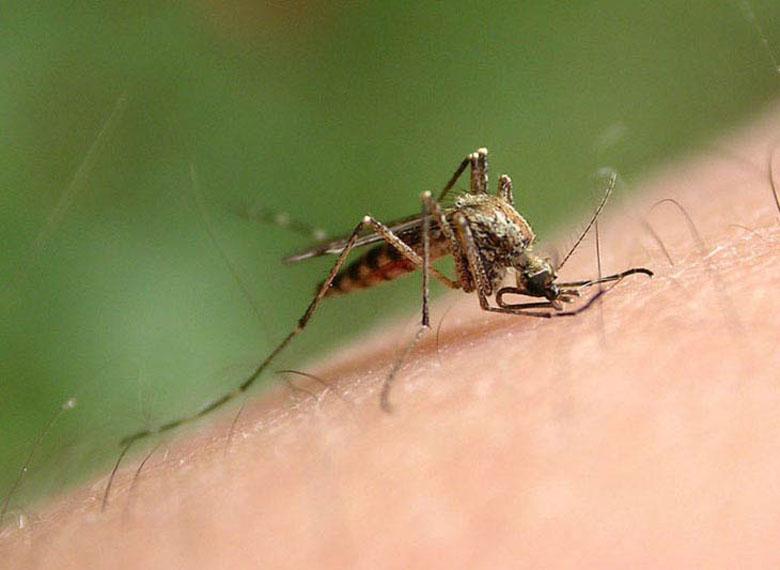 жуков насекомых с названиями