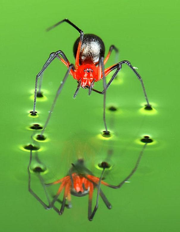 Видеть днем паука