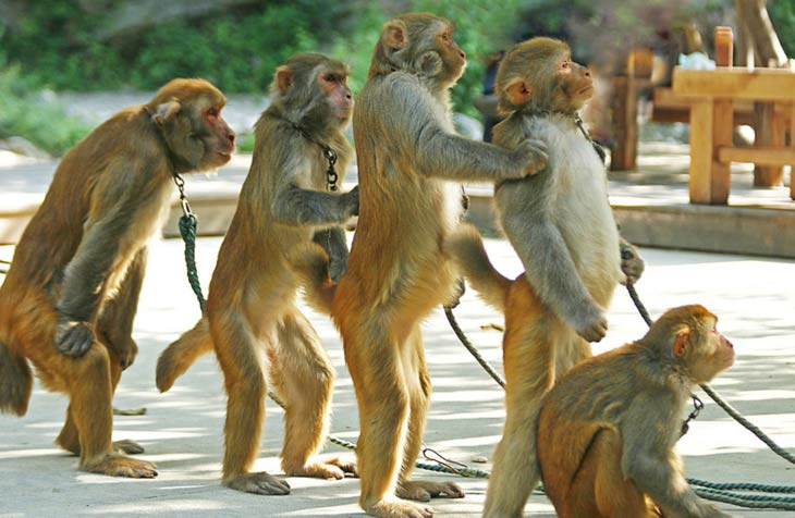 ловить обезьянку